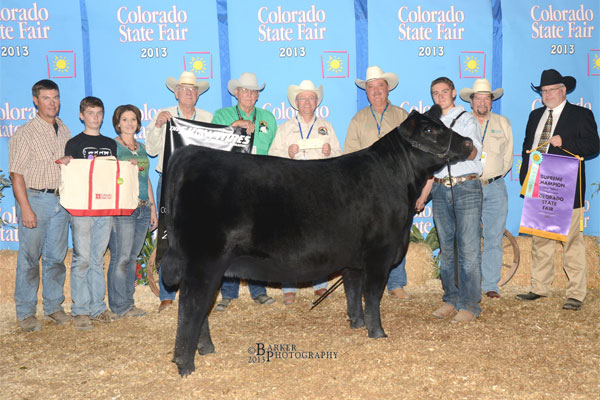 <small>Austin &amp; WAF Honey Bear 251 definitely had a banner year in 2013. One of their highlights was Overall Supreme Heifer &amp; Champion Angus Heifer in the Open Show at Colorado State Fair. We are so looking forward to her becoming one of our featured foundation donors.</small>