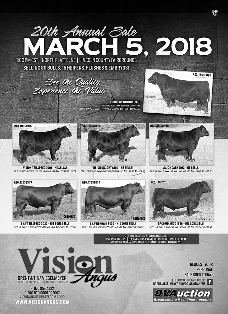 Cattle Sales - Vision Angus - Angus Cattle - Amherst, Colorado